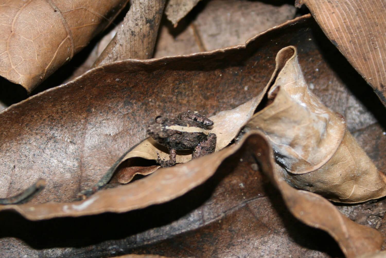 flora e fauna a zanzibar - maisha marefu